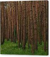 Greening In The Woods Canvas Print
