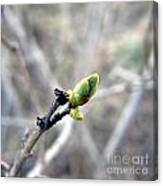 Greennnn Spring Canvas Print