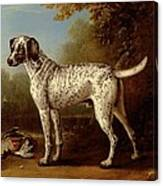Grey Spotted Hound Canvas Print