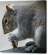 Grey Squirrel Dining Out Canvas Print