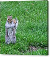 Grey Squirrel In The Rain II Canvas Print