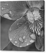 Grey Violet Canvas Print