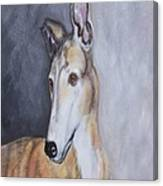 Greyhound In Thought Canvas Print