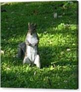 Greynolds Park Squirrel Canvas Print