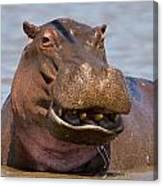 Grinning Hippo Canvas Print