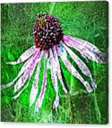 Gritty Coneflower Canvas Print