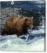 Grizzly Bear Fishing Canvas Print