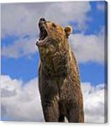 Grizzly Bear Roaring Canvas Print