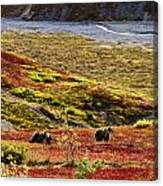 Grizzly Bears And Fall Colours, Denali Canvas Print
