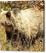 Grizzly Camouflage Canvas Print
