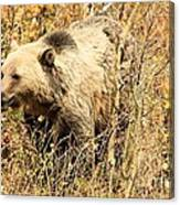 Grizzly In The Brush Canvas Print