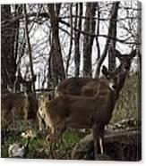 Group Of Deer Canvas Print