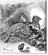 Grouse And Young Canvas Print