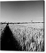 Growing Grain Canvas Print