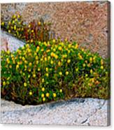 Growing In The Cracks Canvas Print