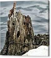 Grumpy Stump Canvas Print