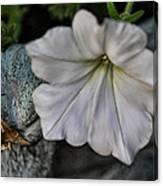 Grundgy Petunia Canvas Print
