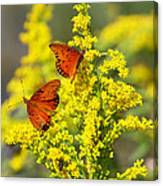 Gulf Fritilaries On Golden Rod Canvas Print