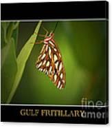 Gulf Fritillary 2 Canvas Print