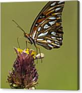 Gulf Fritillary Butterfly - Agraulis Vanillae Canvas Print