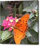 Gulf Fritillary Butterfly At Work Canvas Print