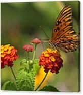 Gulf Fritillary Butterfly On Colorful Lantana  Canvas Print
