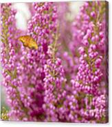 Gulf Fritillary Butterfly On Passionate Pink Flowers Canvas Print