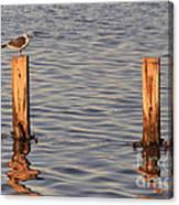Gull At Sunset Canvas Print