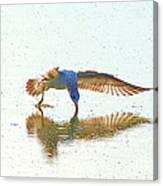 Gull Feeding On Lake Canvas Print