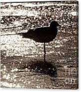 Gull In Silver Tidal Pool Canvas Print