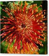Gum Flower Canvas Print