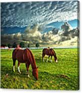 Hailey's Horses Canvas Print