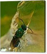 Halicid Bee 12 Canvas Print