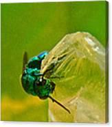 Halicid Wasp 1 Canvas Print
