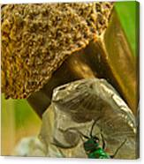 Halicid Wasp 5 Canvas Print