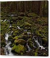 Hall Of The Mosses Canvas Print