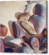 Hallett Cove's Stones - Detail Canvas Print