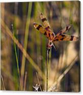 Halloween Pennant Dragonfly Canvas Print