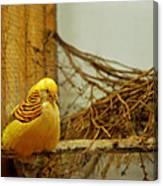 Halloween Yellow Bird Canvas Print