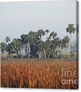 Hammock, Everglades National Park Canvas Print