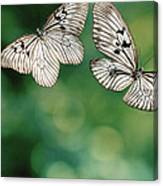 Handkerchief Butterfly Or Wood Nymph Canvas Print