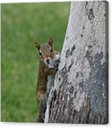 Hanging And Chilling Canvas Print