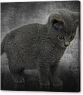 Hannah's Kitten Canvas Print