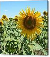 Happiness Is A Sunflower Canvas Print