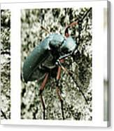 Happy Beetle Canvas Print