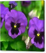 Happy Faces Purple Pansies Canvas Print