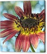 Happy Red Sunflower Canvas Print