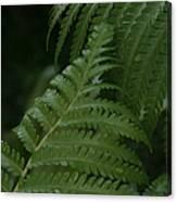 Hapuu Pulu Hawaiian Tree Fern - Cibotium Splendens Canvas Print