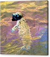 Harbor Seal Canvas Print