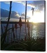 Harbor Sun Canvas Print